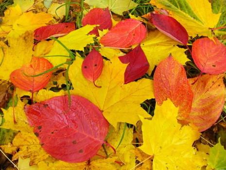 Гадание Берендеев на листьях